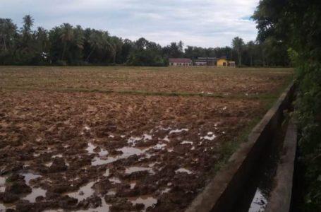 Areal Persawahan Blang Seumasang Gampong Ladang mulai Dilakukan Pengolahan