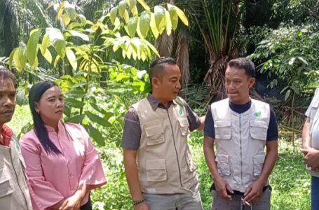 Ketua Patani Langkat Pantau Tanaman di Batang Serangan