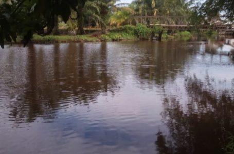 Enceng Gondok Diangkat Aliran Sungai Bubon Lancar