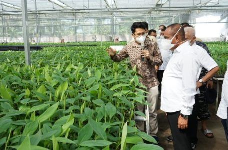 Gubsu Kunjungi PT Hijau Surya Biotechindo Pengembangbiakan Bibit Pisang Barangan dan Kepok