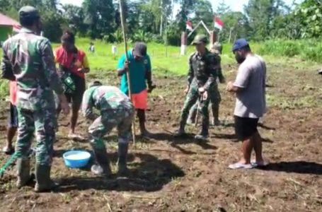 Satgas Pamtas Yonif 131/BRS Bantu Warga Menanam Padi Darat di Papua