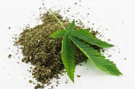Satuan Narkoba Polres Tapanuli Utara Tangkap Pelaku Penyalahgunaan Narkotika